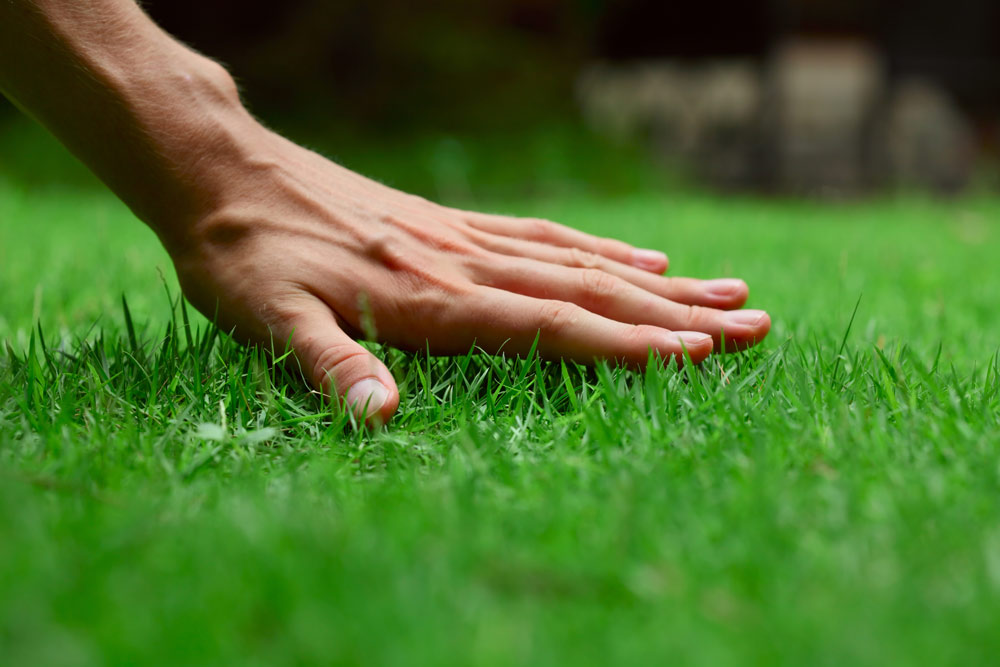 lawn care idaho