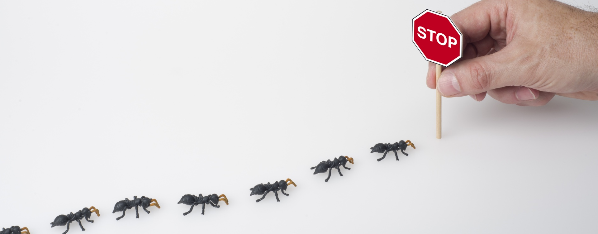 Pest Control Tips When Buying a New Home